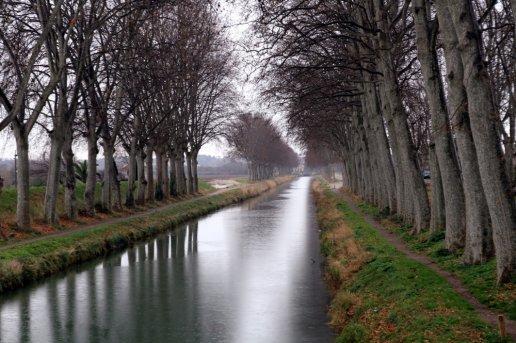 L 39 officiel du canal du midi canal seuls 40 arbres - Manger comme un chancre ...