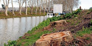 fin-2014-25-des-arbres-du-canal-auront-ete-abattus_786332_510x255