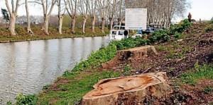 fin-2014-25-des-arbres-du-canal-auront-ete-abattus_959247_667x333