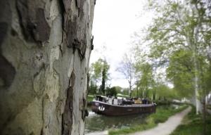 648x415_toulouse-le-23-avril-2013-les-platanes-bordent-le-long-du-canal-du-midi-ici-pra-s-de-ramonville