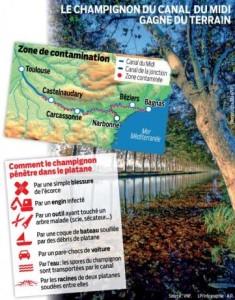 5535265_web-11-02-canal-du-midi-platanes-final-002_545x460_autocrop